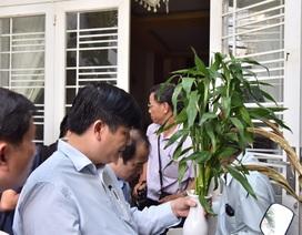 Muỗi truyền vi rút Zika lưu hành phổ biến tại Hà Nội