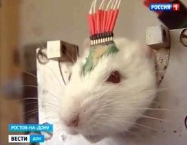 Vũ khí mới chống IS của ông Putin