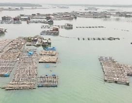 Vụ cá chết trắng bè: Xác định thiệt hại của 15 hộ dân