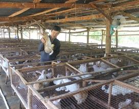 Thoát nghèo, thu nhập hàng trăm triệu đồng/năm nhờ nuôi thỏ