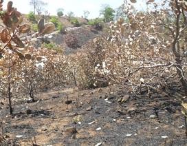 Đốt cả cánh rừng, dụ sư ra chữa cháy để trộm 1,4 triệu đồng