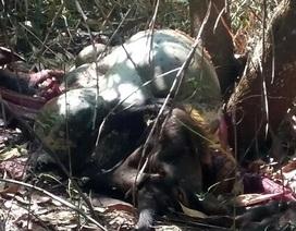 3 cha con bị khởi tố sau vụ bắn chết bò tót
