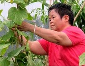 Nhà giàu Trung Quốc đua nhau trồng rau