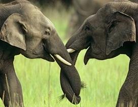 Những cử chỉ âu yếm trong thế giới động vật