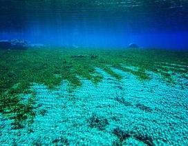 Hồ nước trong vắt có thể nhìn thấu tận đáy