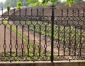 """""""Khu vườn bí mật"""" của quan chức Trung Quốc"""