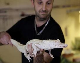 Pháp trưng bày cặp cá sấu bạch tạng cực hiếm