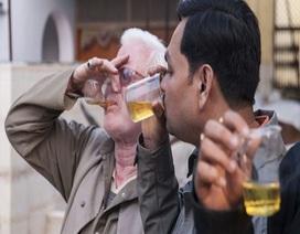 """Uống nước tiểu bò còn """"trinh tiết"""" để chữa bách bệnh"""