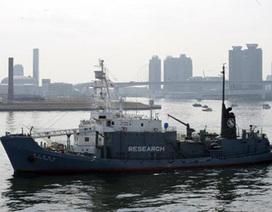 New Zealand nổi giận vì tàu săn bắt cá voi Nhật vào vùng đặc quyền kinh tế