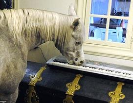 Hài hước con ngựa thích soi gương và chơi đàn piano