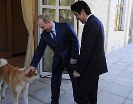 Putin đưa thú cưng đón Thủ tướng Nhật