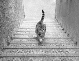 Lý giải vì sao dân mạng tranh cãi chú mèo đi lên hay đi xuống?