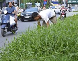 Hà Nội: Người dân ước gì có thể chăn trâu trên phố