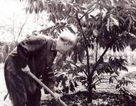 Hoài niệm Tết trồng cây