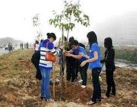 Để Tết trồng cây thực sự có ý nghĩa.