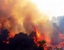 """Rừng thông nhiều năm tuổi bị """"giặc lửa"""" thiêu cháy"""