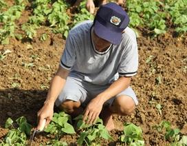 Tâm sự của nam sinh Kinh tế bằng giỏi về quê trồng rau, nuôi lợn