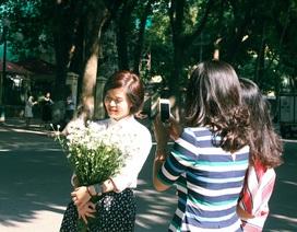 Tinh khôi sắc trắng cúc họa mi trên phố phường Hà Nội