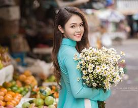 Cúc họa mi Hà Nội khoe sắc bên thiếu nữ Sài Gòn