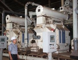 Bình Định: Dân dựng lều, ép nhà máy ngừng sản xuất vì ô nhiễm