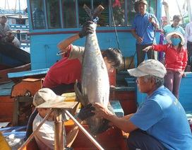 Hơn 14.000 ngư dân ăn Tết cổ truyền trên biển