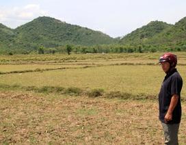 71 hồ chứa cạn kiệt, hàng ngàn ha đất sản xuất bỏ hoang