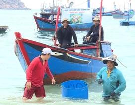 Thanh niên Bình Định lặn bắt sao biển gai bảo vệ rạn san hô