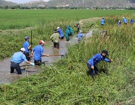 Thanh niên Bình Định xuống nước nạo vét kênh mương cho dân