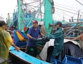 """Bình Định: Ngư dân dầm mưa bán cá """"chạy"""" bão"""