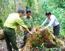 Xác định 9 đối tượng tham gia phá rừng phòng hộ