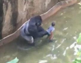 Bùng phát tranh cãi sau vụ sở thú Mỹ bắn chết khỉ đột để cứu bé 3 tuổi