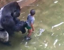 Mỹ có thể khởi tố cha mẹ bé trai bị rơi vào chuồng khỉ