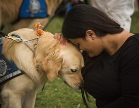 Đội chó xoa dịu nỗi đau cho các nạn nhân vụ thảm sát hộp đêm Mỹ