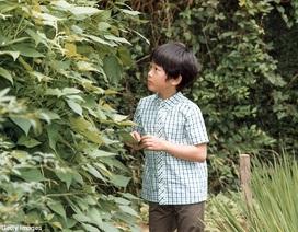"""Hoàng tử """"nhí"""" Nhật Bản hào hứng thăm đồng lúa"""