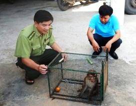 Người dân giao nộp khỉ đuôi lợn quý hiếm