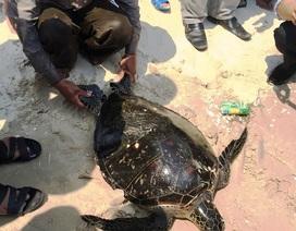 Thả lưới, bắt được rùa quý hiếm