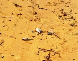 Ngư dân phát hiện cá chết xếp lớp dưới đáy biển Quảng Bình?