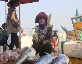 Quảng Bình: Lập nhiều điểm bán hải sản sạch phục vụ người dân