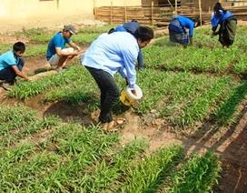 Thầy cô chở đất về làm vườn rau cải thiện bữa ăn cho học sinh