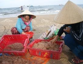 Ngư dân phấn khởi vì khuyếc biển đạt các chỉ tiêu an toàn thực phẩm