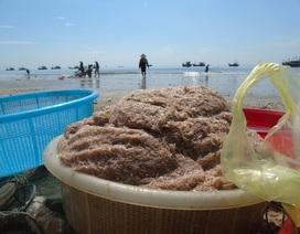 Ngư dân kỳ vọng biển hồi sinh khi trúng đậm mùa ruốc