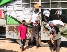 Hỗ trợ hơn 5.500 tấn gạo cho ngư dân Quảng Bình