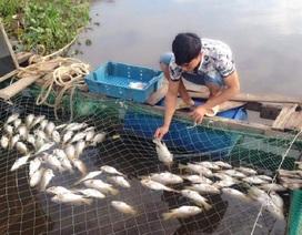 """Vụ cá chết hàng loạt: """"Cá chết hết rồi, lấy tiền đâu cho con đi học!"""""""