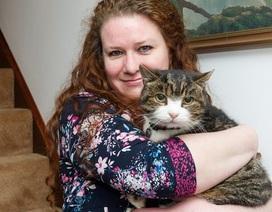 Kỳ diệu mèo đoàn tụ với chủ sau 12 năm lưu lạc