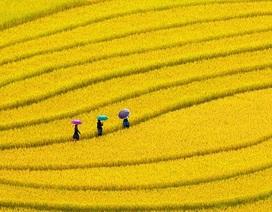 Những thước phim đẹp ngỡ ngàng về Việt Nam trong năm 2015