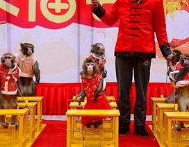 Năm khỉ, xiếc khỉ lên ngôi