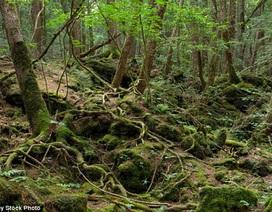Khu rừng rùng rợn nhất nước Nhật được khắc họa trên màn ảnh như thế nào?