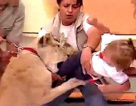 Khoảnh khắc kinh hoàng em bé bị sư tử tấn công trên truyền hình