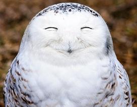 Bật cười với những khoảnh khắc hài hước của thiên nhiên