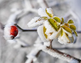 Chùm ảnh mùa đông đang đến trên khắp thế giới